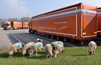 Spedition-Rüdinger-Schaf-Herde optimiert ökologischen Fußabdruck