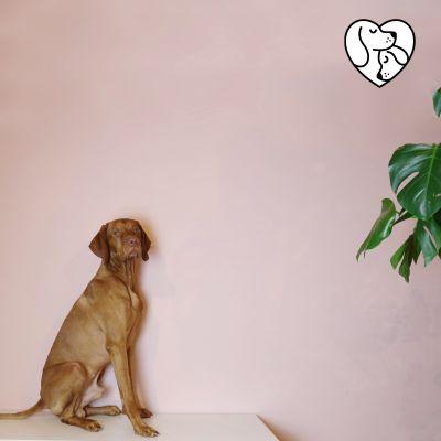 Kleinen Unternehmen eine Plattform bieten:  iinu.de – der Online-Marktplatz für hochwertigen Hundebedarf
